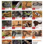 Community Snake Rescue Guide PRINT 1