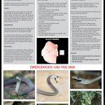 Black Mamba Fact Sheet V5