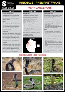 Rinkhals Fact Sheet V4