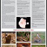 Snouted Cobra Fact Sheet V4