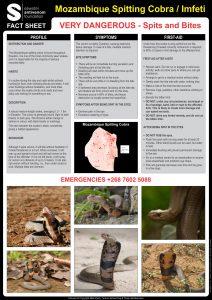 Mozambique Spitting Cobra Fact Sheet V5
