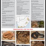 Berg Adder Fact Sheet V2